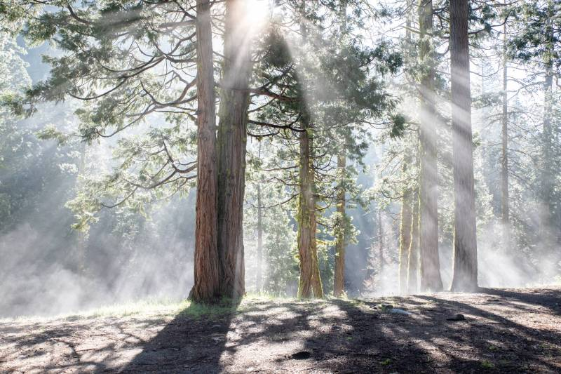 Stanislaus-National-Forest-Morning-Sun-DSK